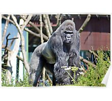 Wildlife 6 Poster