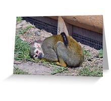 Wildlife 9 Greeting Card