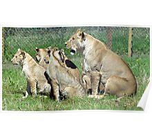 Wildlife 12 Poster