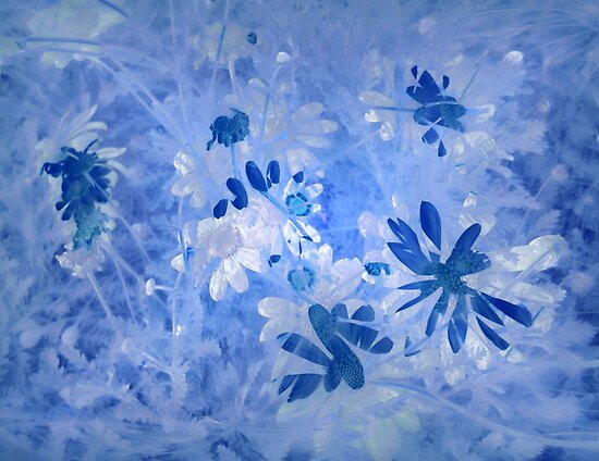 Daisies in Blue by Albert