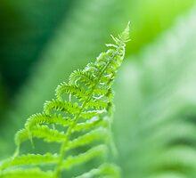 Fresh Fern by Arata