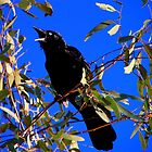 Calling Crow by Michelle Munday