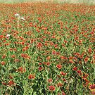 Indian Blanket Blanket by Ron Russell