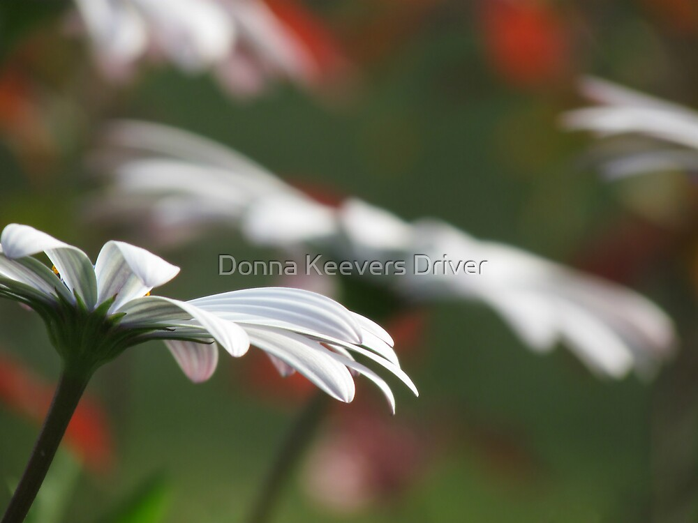 Standing Out by Donna Keevers Driver