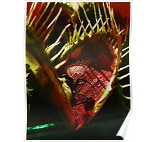 The Carnivorous Plant  Poster