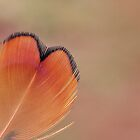 Wings of Love by Deb Maidment