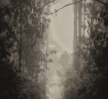 Follow The Light  - Laurel Hill NSW (Monochrome) - The HDR Experience by Philip Johnson