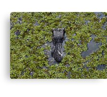 Crocodile Coming Canvas Print
