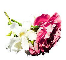 rose and white flower by dedakota