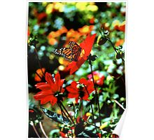 Monarch Butterfly Full Frame Poster
