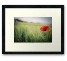 Flower in the field Framed Print