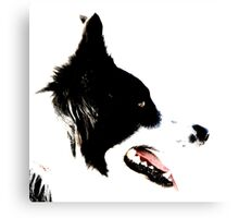 siluete border collie Canvas Print