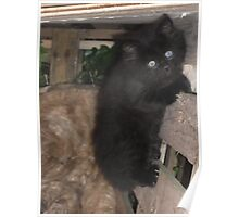 Kitten -(090613)- Digital photo/Fujifilm FinePix AX350 Poster