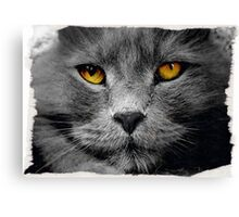 Cat with white background Canvas Print