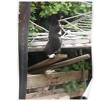 Kitten I -(090613)- Digital photo/Fujifilm FinePix AX350 Poster
