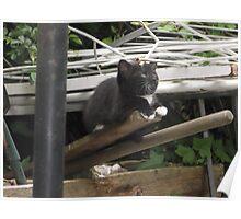 Kitten II -(090613)- Digital photo/Fujifilm FinePix AX350 Poster