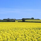 Worcestershire rape field by hjaynefoster