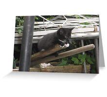 Kitten III -(090613)- Digital photo/Fujifilm FinePix AX350 Greeting Card