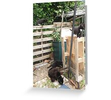 Cat/Kittens -(090613)- Digital photo/Fujifilm FinePix AX350 Greeting Card