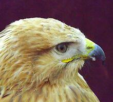 eagle by dedakota