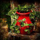Strawberry Pot by Ginger  Barritt