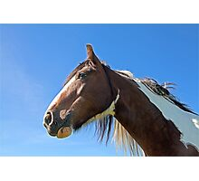 Brown Horse 1 Photographic Print