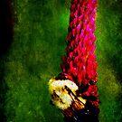 Bee on Clover by Ginger  Barritt