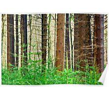 Pine Tree Trunks Poster