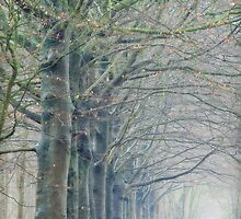 Foggy Path by Salwa Afef