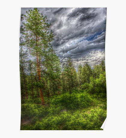 HDR Trees at Beulah Mountain Park Poster