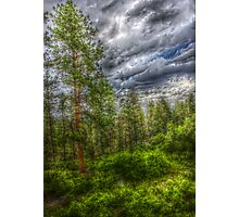 HDR Trees at Beulah Mountain Park Photographic Print