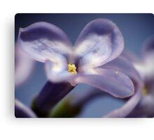 Lilacs 1 Canvas Print