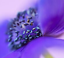 Purple Heart by Salwa Afef