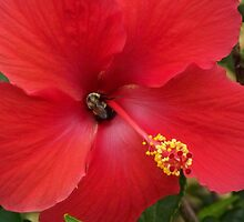 Hibiscus and Visitor by James Brotherton