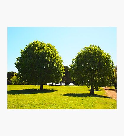 Two trees in the foreground Photographic Print