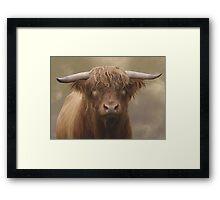 Highland Bull Framed Print