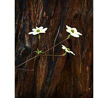 Dogwoods and Bark Photographic Print