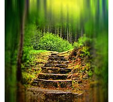 A Path to the Forest Photographic Print