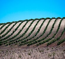 Andalucian lines by Cla's Photography