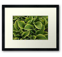 Hosta Framed Print