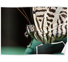 Colobura dirce (Zebra Mosaic) Poster