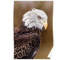 Eagle Down Poster