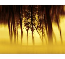 Gold Mist Story Photographic Print