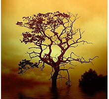 Evening Tree Photographic Print