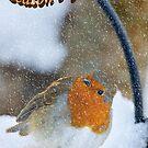 Season's greetings - robin in snow by Andrew Jones
