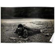 Baby Snapping Turtle Poster