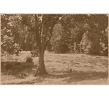 Cemetery Pond  Photographic Print
