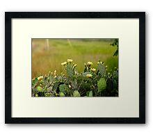 Louisiana Cactus Framed Print