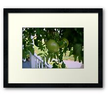 Green Tomatoes     ^ Framed Print