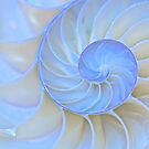 Light Spirals by Barbara  Brown